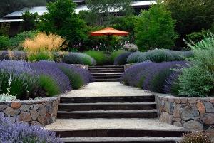 lavenderumbrella-1